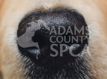 Adams County SPCA