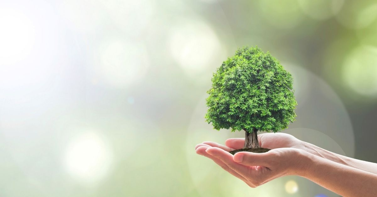 Sustainability Is No Longer Just a Niche Market